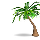 Palm Tree With Text Space Royalty Free Stock Photography