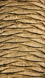 Palm Tree Texture Royalty Free Stock Photography
