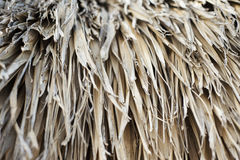 Palm tree texture. Of a cabana (palapa) covered with leaves Royalty Free Stock Photos