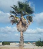 Palm tree. Without palm there is no paradise Stock Photography