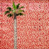 Palm tree and tiled wall Royalty Free Stock Images