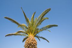 Palm tree top Stock Photography