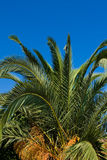 Palm tree top Stock Images