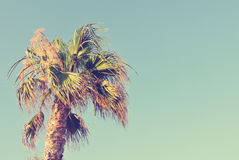 Palm tree top against clear blue sky, retro/vintage Royalty Free Stock Images