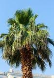Palm tree top (closeup) Royalty Free Stock Photography