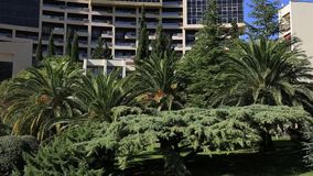 Palm tree top closeup on sea coast background. Montenegro, Budva stock video