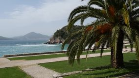 Palm tree top closeup on sea coast background. Montenegro, Budva stock footage