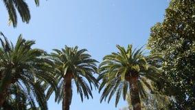 Palm tree top closeup on sea coast background. Montenegro, Budva stock video footage
