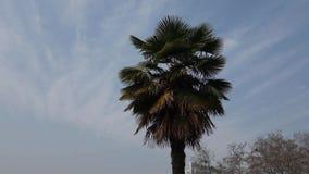 Palm Tree stock video