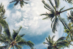 Palm tree tops against sky Stock Image