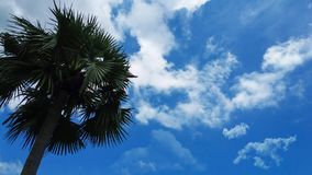 Palm tree touching the sky stock images