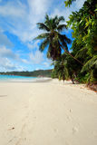 Palm tree towering above the b. Famous beach at Anse Lazio, Praslin, Seychelles royalty free stock photography