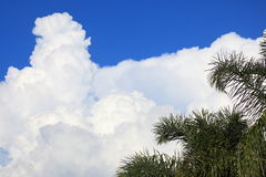 Palm tree with towering cumulus cloud Stock Images