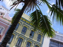 Palm tree in town. A single palm tree adorns a plaza in front of typical canarian houses Stock Photos