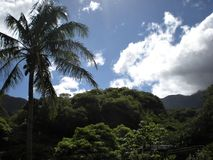 Palm Tree, Tree-Covered Mountains, and Clouds in Iao Valley State Park Stock Photography