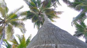 Palm Tree, Tree, Nature Stock Images