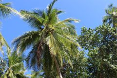 Palm Tree. S on a sunny day in the maldives Royalty Free Stock Photos
