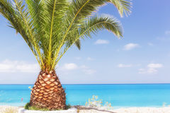 Palm tree on a tropic island. With sea and sky on the background. Blank space for text Royalty Free Stock Image