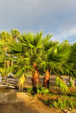 Palm tree in tropic park Royalty Free Stock Photos