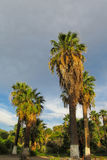 Palm tree in tropic park Stock Photo