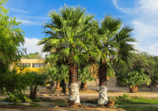 Palm tree in tropic park Stock Image