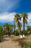Palm tree in tropic park Royalty Free Stock Image