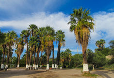 Palm tree in tropic parks Stock Images