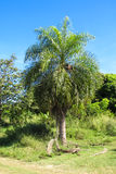 Palm tree in tropic Stock Images