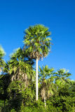 Palm tree in tropic Stock Photo
