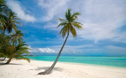 Palm tree on a tropical beach. Palm tree on a beautiful tropical beach Royalty Free Stock Photos