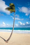 Palm tree on a tropical beach. Lonely palm tree on a tropical beach royalty free stock photos