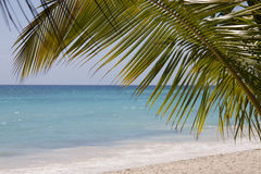 Palm tree on tropical beach Royalty Free Stock Photography