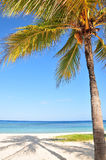 Palm tree on tropical beach Stock Photo