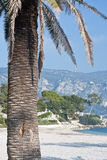 Palm tree on tropical beach. In french riviera Royalty Free Stock Photos