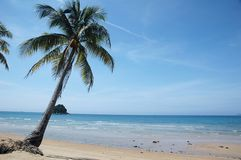 Palm Tree on Tropical Beach Stock Photography