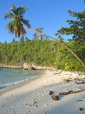 Palm tree on a tropical beach. Palm tree over a tropical beach - Togians island - Sulawesi - Indonesia Stock Photos