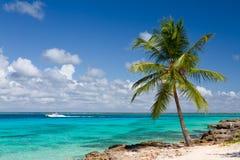 Palm tree on the tropical beach Royalty Free Stock Photos
