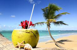 Palm tree in a tropical beach Stock Photos