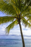 Palm tree on tropical beach Royalty Free Stock Photos