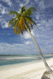 Palm tree on tropical beach. Beautiful tropical beach seascape with palm tree Royalty Free Stock Images