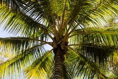 Palm Tree. Tropical palm tree on the beach Royalty Free Stock Image