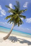 Palm tree on tropical beach. Palm tree on a tropical beach with a turquoise sea and blue sky with fluffy clouds Stock Images
