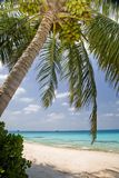 Palm tree on tropical beach Royalty Free Stock Photo