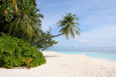 Palm Tree on tropical Beach. A Palm tree leans into a tropical beach with clear blue waters and pristine white sands Stock Photo