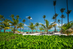 Palm tree on the tropical beach.  Stock Photo