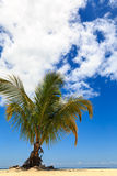 Palm tree on a tropical beach against a blue sky Royalty Free Stock Photos