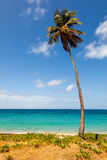 Palm Tree on Tropical Beach against Ocean. And Blue Sky with Copy Space Royalty Free Stock Images