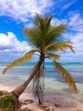 Palm tree on the tropical beach, Caribbean Sea. Dominican Republic Stock Photos