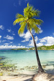 Palm tree at tropical beach. Palm tree at Caribbean Sea beach, sailboat in background Royalty Free Stock Photography