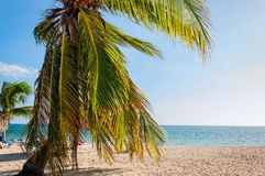 Palm Tree on a Tropical Beach in Cuba. Tropical palm tree at Ancon Beach with white sands and calm sea waters in the Caribbean island of  Cuba Royalty Free Stock Images